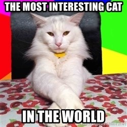 Evil Cat Bonbon - the most interesting cat in the world