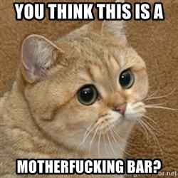 motherfucking game cat - YOU THINK THIS IS A  MOTHERFUCKING BAR?