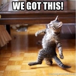 haters gonna hate cat - We got this!
