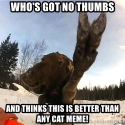 Peace Out Moose - Who's got no thumbs and thinks this is better than any cat meme!