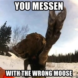 Peace Out Moose - You messen with the wrong moose