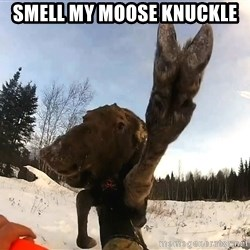 Peace Out Moose - smell my moose knuckle