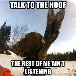 Peace Out Moose - Talk to the hoof the rest of me ain't listening