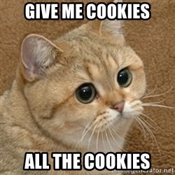 motherfucking game cat - give me cookies all the cookies