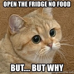motherfucking game cat - open the fridge no food but.... but why