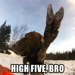 Peace Out Moose -  High Five, bro