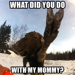 Peace Out Moose - What did you do with my mommy?