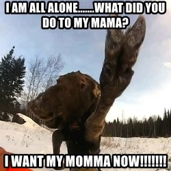 Peace Out Moose - I am all alone.......WHAT DID YOU DO TO MY MAMA? I want my momma now!!!!!!!