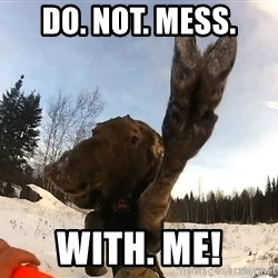 Peace Out Moose - DO. NOT. Mess. With. ME!