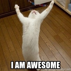 praise the lord cat -  i am awesome