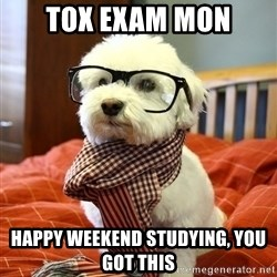 hipster dog - tox exam mon happy weekend studying, you got this