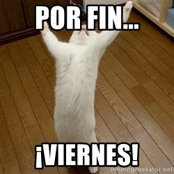 praise the lord cat - POR FIN... ¡VIERNES!