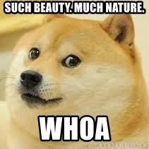 dogeee - such beauty. much nature. Whoa