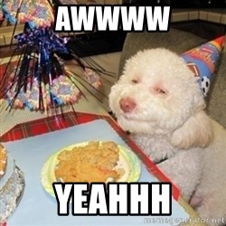 Birthday dog - Awwww Yeahhh