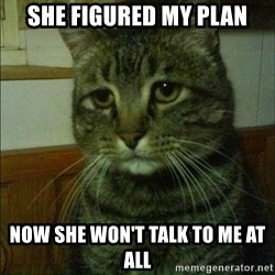 Depressed cat 2 - she figured my plan now she won't talk to me at all