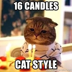 Birthday Cat - 16 Candles Cat Style