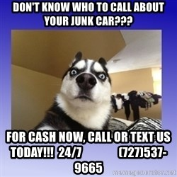 Dog Surprise - don't know who to call about your junk car??? For cash now, call or text us today!!!  24/7                (727)537-9665
