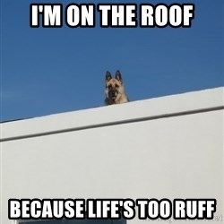 Roof Dog - I'M ON THE ROOF BECAUSE LIFE's too ruff