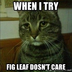 Depressed cat 2 - When i try Fig Leaf Dosn't care