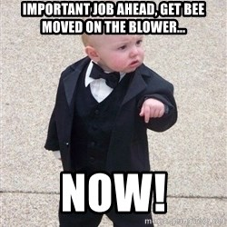 gangster baby - important job ahead, get bee moved on the blower... now!