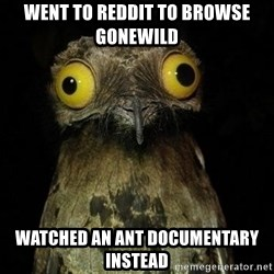 Weird Stuff I Do Potoo - went to reddit to browse gonewild watched an ant documentary instead