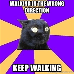 Anxiety Cat - walking in the wrong direction keep walking