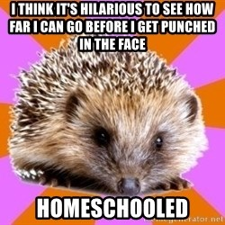 Homeschooled Hedgehog - i think it's hilarious to see how far i can go before i get punched in the face homeschooled