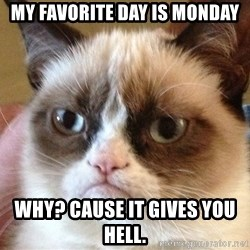 Angry Cat Meme - MY FAVORITE DAY IS MONDAY WHY? CAUSE IT GIVES YOU HELL.