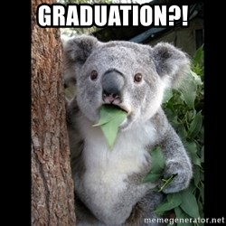 Koala can't believe it - Graduation?!