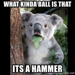 Koala can't believe it - what kinda ball is that its a hammer