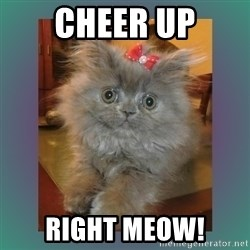 cute cat - cheer up right meow!