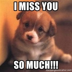 cute puppy - I MISS YOU So much!!!
