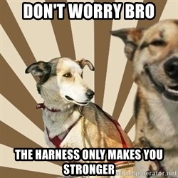 Stoner dogs concerned friend - don't worry bro the harness only makes you stronger