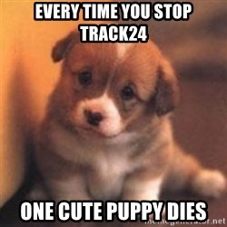 cute puppy - every time you stop Track24 one cute puppy dies
