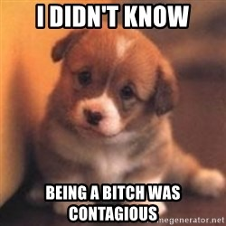 cute puppy - i didn't know being a bitch was contagious