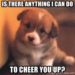 cute puppy - Is there anything I can do To cheer you up?