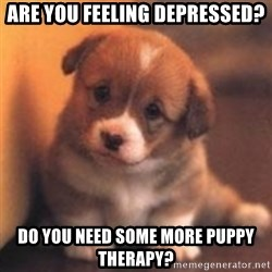 cute puppy - are you feeling depressed? do you need some more puppy therapy?
