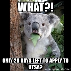 Koala can't believe it - what?! only 28 days left to apply to utsa?