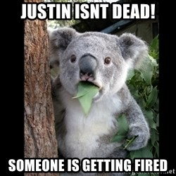 Koala can't believe it - justin isnt dead! someone is getting fired