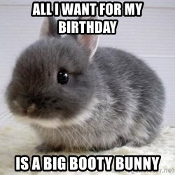 ADHD Bunny - All I want for my birthday  Is a big booty bunny