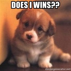 cute puppy - Does I wins??