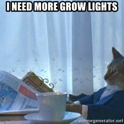 Sophisticated Cat - i need more grow lights