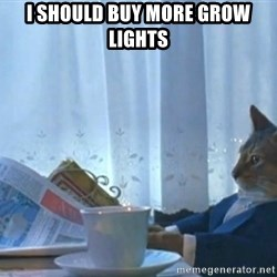 Sophisticated Cat - I should buy more grow lights