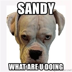 stahp guise - SANDY  WHat are u doing