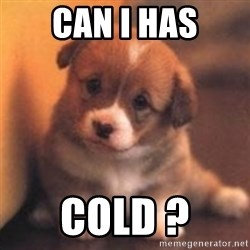 cute puppy - Can I has cold ?