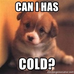cute puppy - can I has cold?