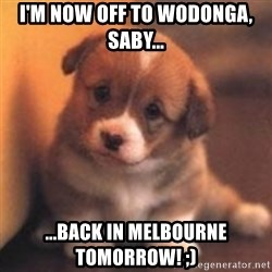cute puppy - I'm now off to Wodonga, Saby... ...back in Melbourne tomorrow! ;)