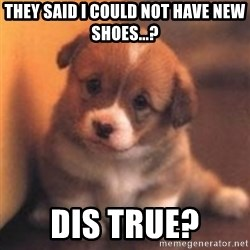 cute puppy - They said I could not have new shoes...? dis true?