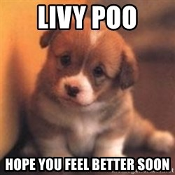cute puppy - Livy poo hope you feel better soon