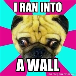 Perplexed Pug - I RAN INTO  A wall